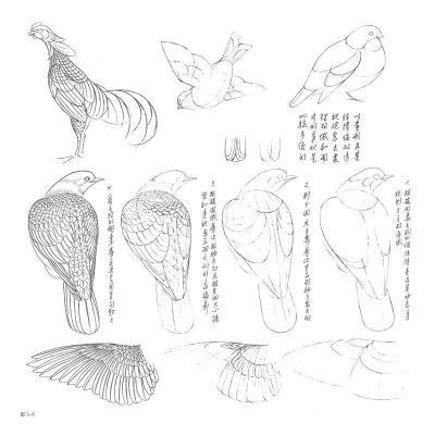国画水墨画工笔画绘画技法教程书籍 鸟禽工笔写生设色技法 鸟禽花卉