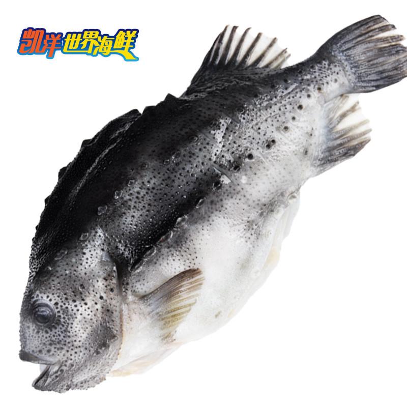 凯洋世界海鲜 冰岛海参斑3-4斤一条 进口野生石斑鱼包邮