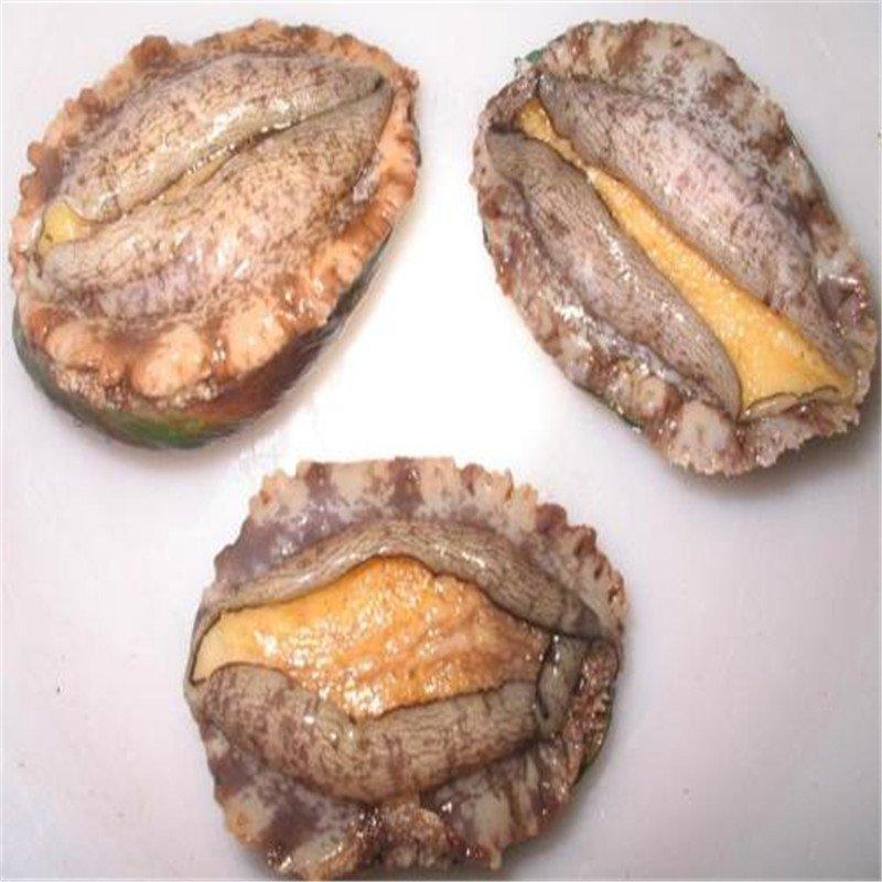 金御丰海鲜 大连鲜活鲍鱼 1个 12.5g-13g 小鲍鱼 鲍鱼