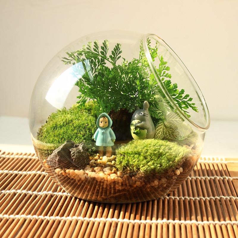 微景观生态瓶diy盆栽苔藓植物创意盆栽微缩景观迷你植物图片